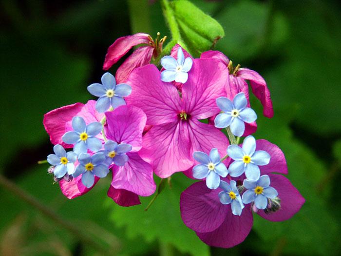http://foto-cvety.narod.ru/images/flowers019.jpg