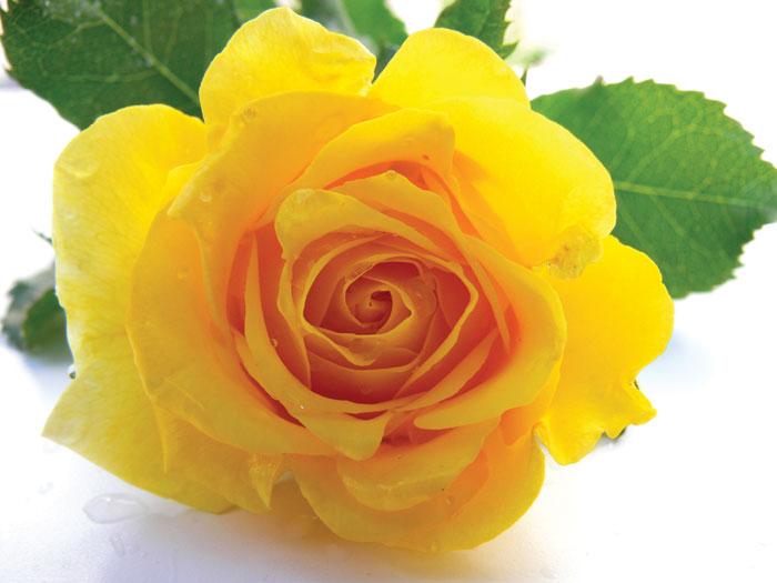 http://foto-cvety.narod.ru/images/flowers065.jpg
