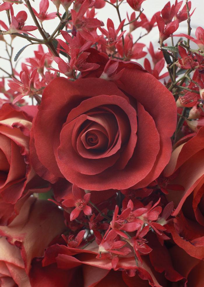 Натяжные потолки.  Flower24d - Цветы - Каталог изображений для фотопечати.