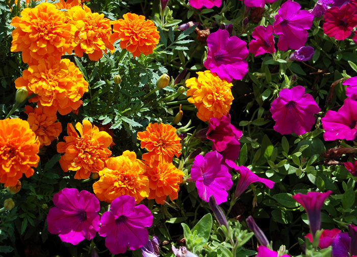 http://foto-cvety.narod.ru/images/flowers144.jpg
