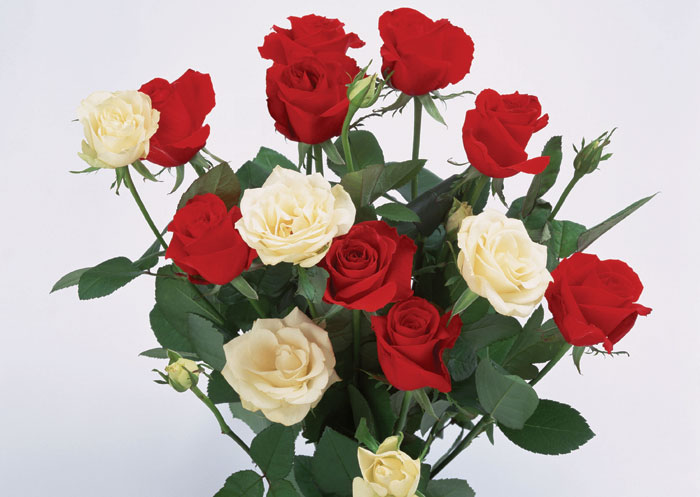 http://foto-cvety.narod.ru/images/flowers162.jpg