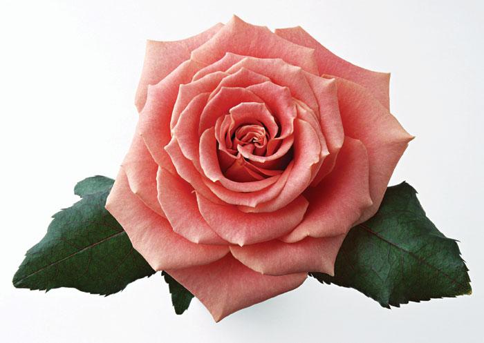Люблю цветы очень красивые цветы
